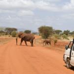 Packing for Safari