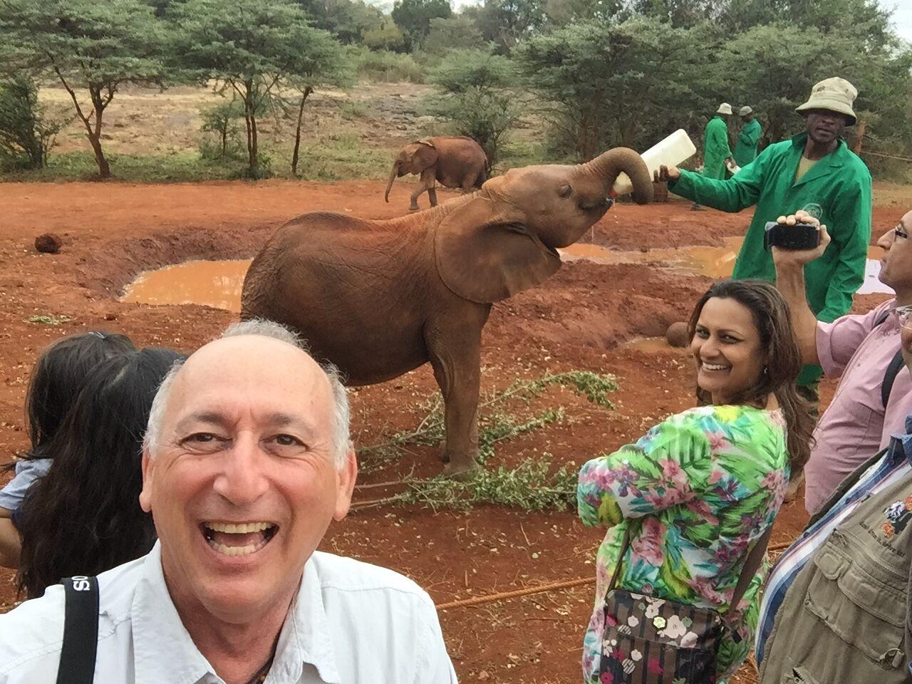 elephant in Nairobi