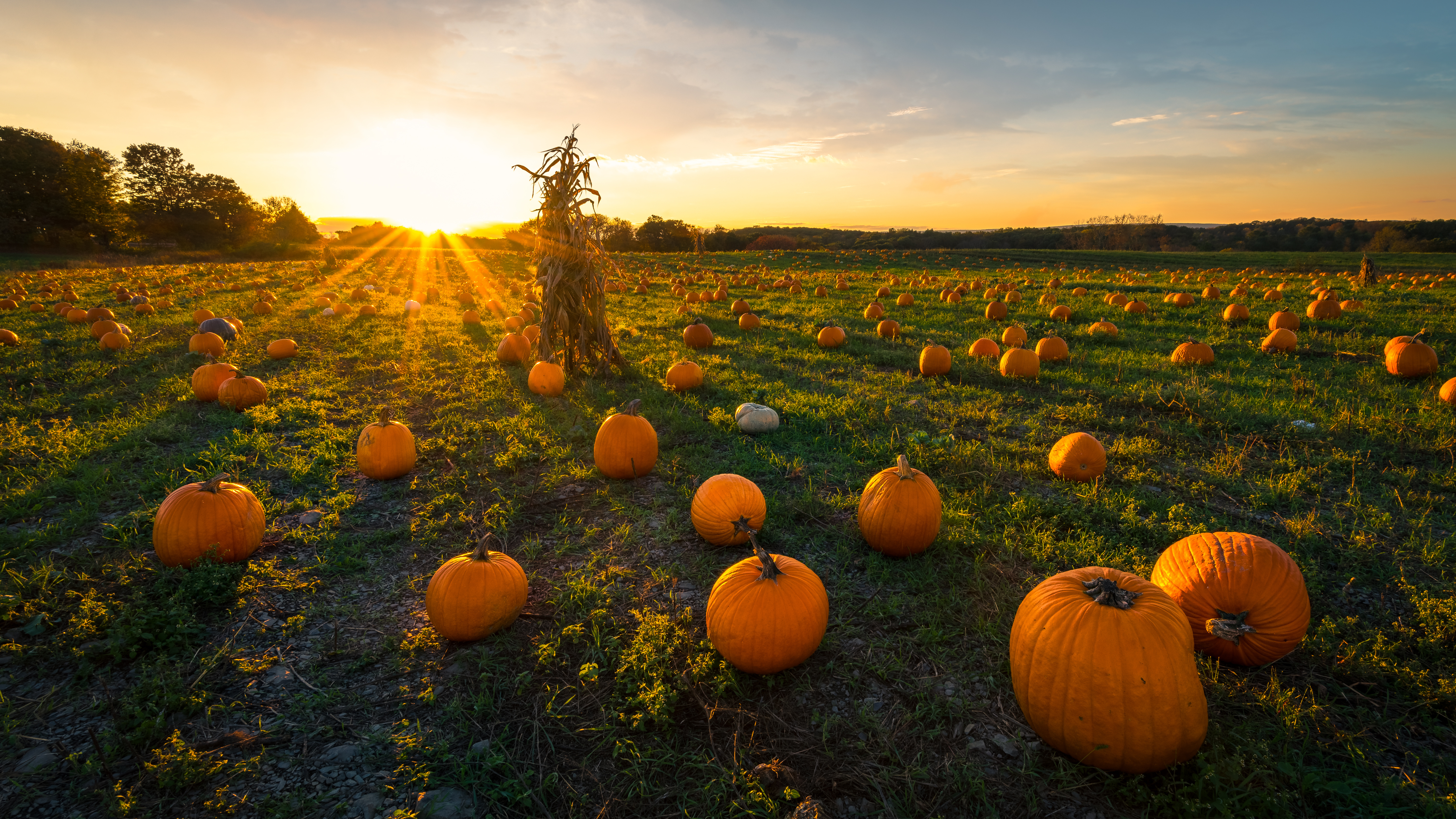 Top Pumpkin Patches In The Midwest